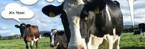 Your customers are NOT content cows