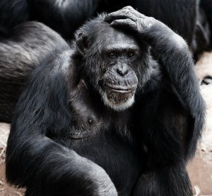 Confused ape. Don't confuse your readers.