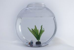 Fish in fish bowl. Your readers aren't goldfishes.